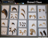 Game   Animal Claws