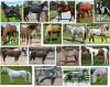 Colours of the horse - Dot Quiz