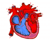 Label a heart - Science Exam study