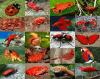 Animal Colours: Red