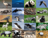 Animal Colours: Black and White