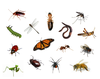 Bugs in French
