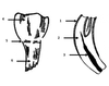 Parts of a Horse's Tooth