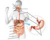 Digestive System Labeling interactive